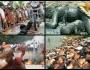 Mengungkap Foto-foto Palsu Tragedi MuslimRohingya